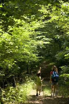 boy_and_girl_hiking_along_sunlit_path_in_woods_with_walking_sticks_and_backpack